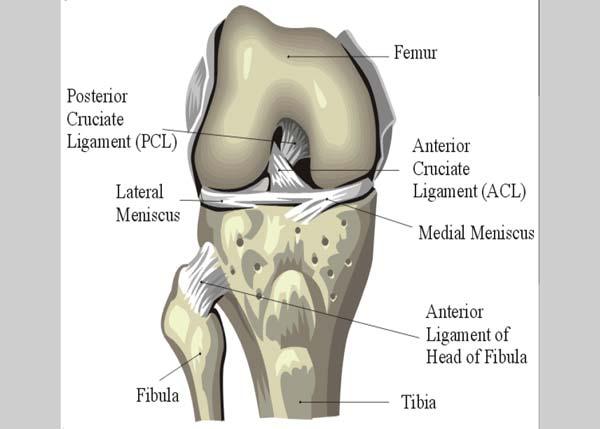 Treating Knee Injuries, Preventing Knee Injuries