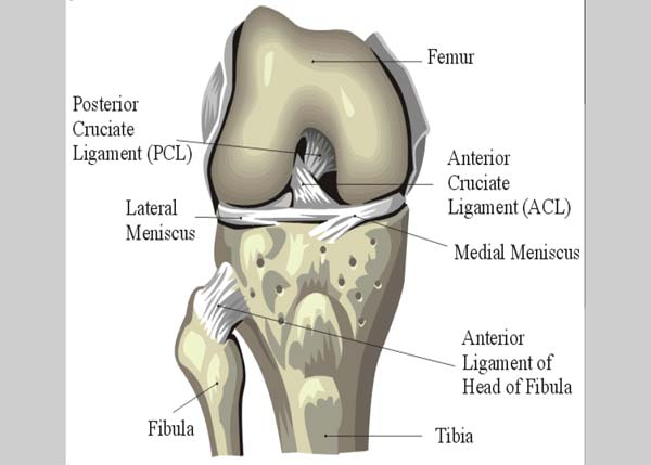 Treatment and Prevention of Knee Injuries